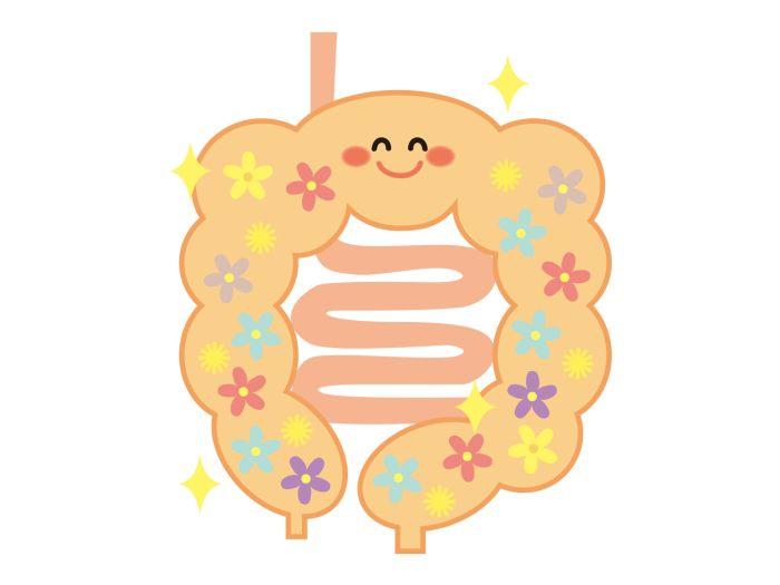 スムージーの食物繊維と腸内フローラの関係 改善する3つの効果